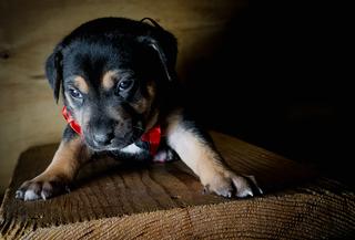 WaWa (PA Pups)