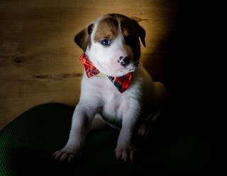 Nittany (PA Pups)
